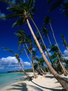 Palm trees and coral sands